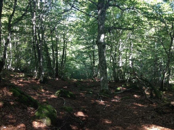 randonnée tour des monts d'Aubrac