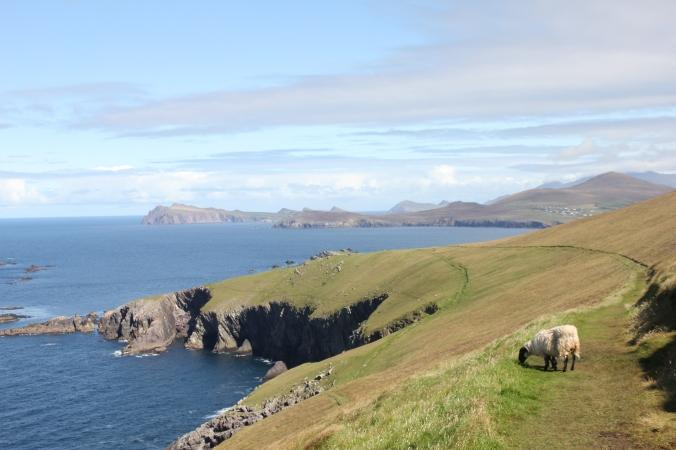Dingle Irlande